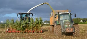 ETA Gautier - récolte maïs ensilage