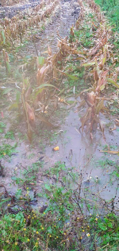 ETA Gautier - Maïs sous l'eau !